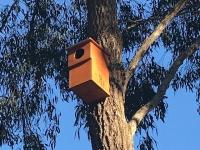 2020-09-Nesting-box-on-tree