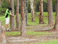 Rex Williams in Trees