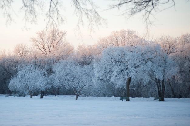 Winter Smow image